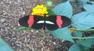 Gyvų tropinių drugelių paroda