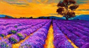 Tapome purpurinį lauką