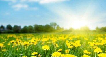 Mindfulness (dėmesingo įsisąmoninimo) tylos diena
