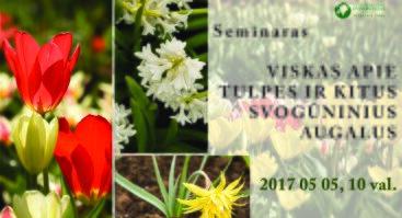 Viskas apie tulpes ir kitus svogūninius augalus