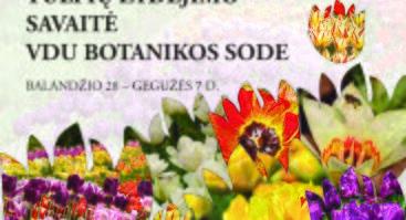 Tulpių žydėjimo savaitė VDU Kauno botanikos sode