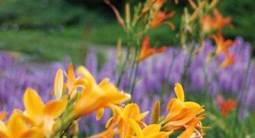 Vasaros gėlių paroda