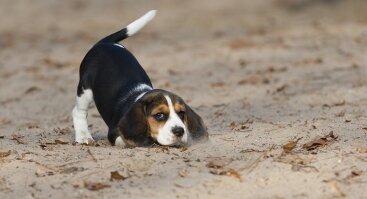 Puppystyle