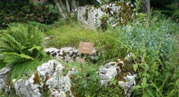 Paskaita apie Šveicarijos botanikos sodus, kalnus ir JTO būstinę