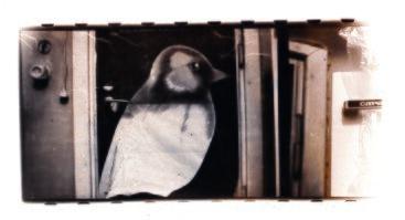 Raimundo Urbono (1963-1999)  fotografijų paroda