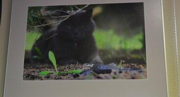 """Gamtos fotografų klubo """"Žalias skėtis"""" parodos atidarymas"""