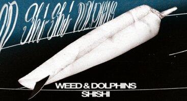 Weed shishi dolphins