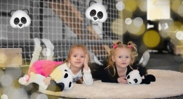 Pandų fiesta