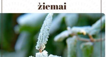 Nemokamas seminaras: Augalų paruošimas žiemai