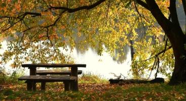 8 savaičių STRESO VALDYMO kursai, grįsti dėmesingu įsisąmoninimu (mindfulness)