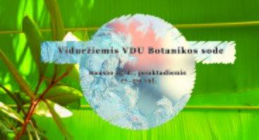 Viduržiemis VDU Botanikos sode Kaune