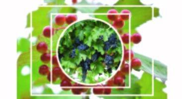 """""""Sezoninė sodo augalų priežiūra. Vynuogės, aktinidijos, avietės, serbentai, braškės ir kt. augalai"""""""