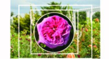 """Seminaras """"Gėlių dekoratyvumo vertinimas ir panaudojimas gėlynuose"""""""
