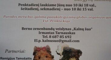 Šunų skulptūrėlių kolekcijos paroda
