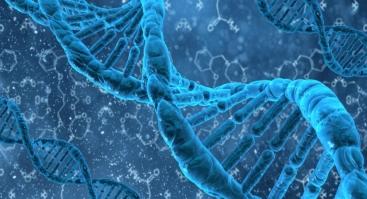 DNR Aktyvacija PRODNA
