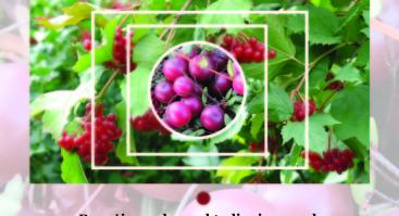 """Teorinis-praktinis seminaras """"Spanguolių ir putinų auginimas – alternatyva tradicinei sodininkystei"""""""