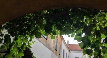 Netikėti kiemeliai ir sodeliai Vilniuje