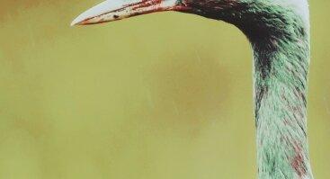 """Dalios Račkauskaitės fotografijų paroda """"Mona paukštės"""""""