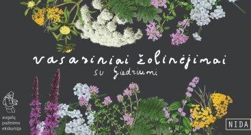 Vasariniai žolinėjimai su Giedriumi. Nida