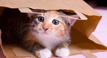 Katė maiše