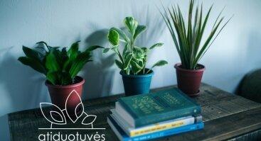 Atiduotuvės. Augalai ir knygos.
