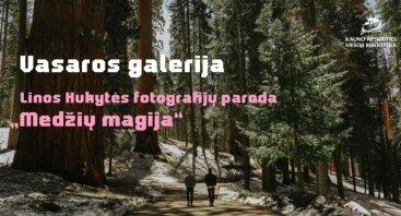 """VASAROS GALERIJA. Linos Kukytės fotografijų paroda """"Medžių magija"""""""