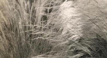 """KAUNAS PHOTO 2021 paroda: Martha Thomas (JAV) """"Nepamiršk, čia jums ne Lietuva"""""""