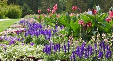 Pasivaikščiojimai po vienmečių gėlių gėlynus