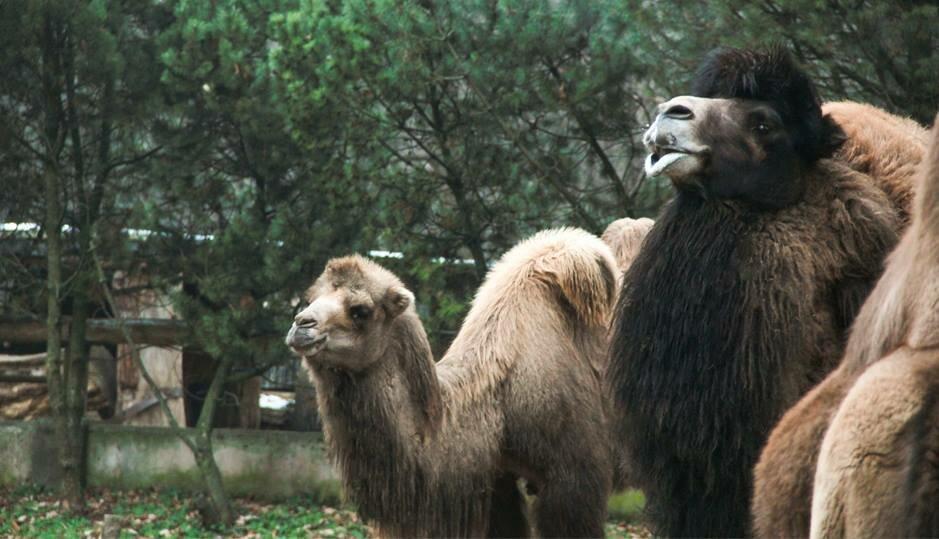 Lietuvos zoologijos sodas