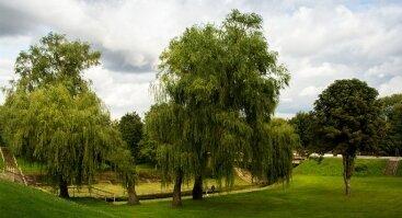 Kėdainių miesto parkas