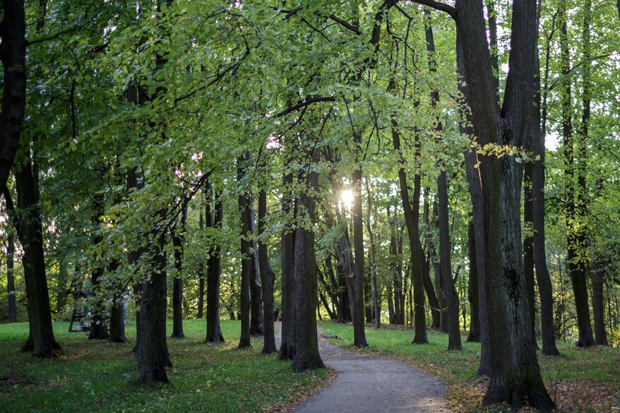 Vytauto parkas